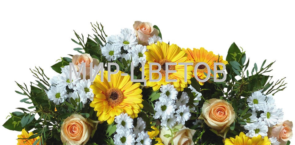 bouquet-of-flowers-2614636_960_720